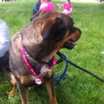 r4l dog 1 150x150 Race For Life   Trent Park 16/06/13